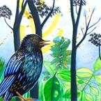 Starlingicoon