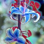 Flowers2icoon