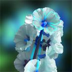 BleuVIcoon